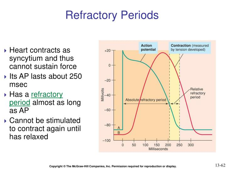 Refractory Periods