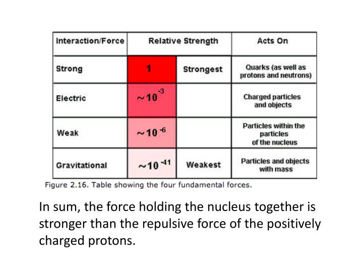 In sum, the force holding the nucleus together is stronger than the repulsive force of the positively charged protons.