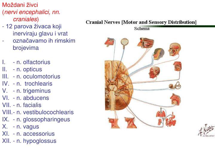 Moždani živci