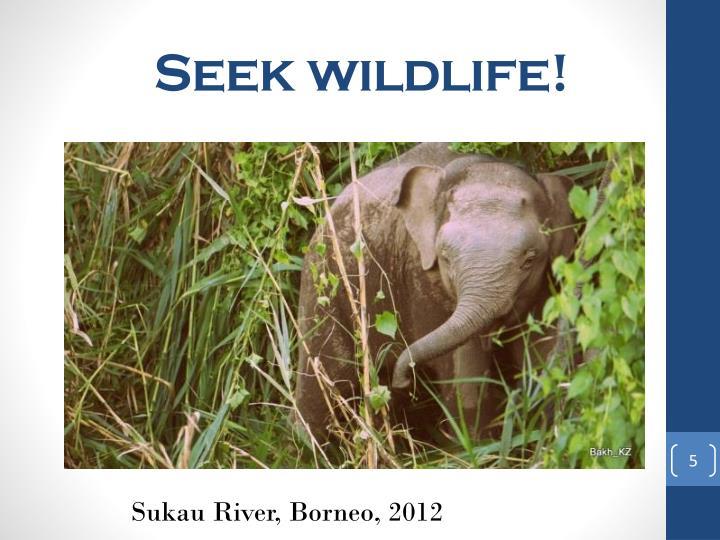 Seek wildlife!
