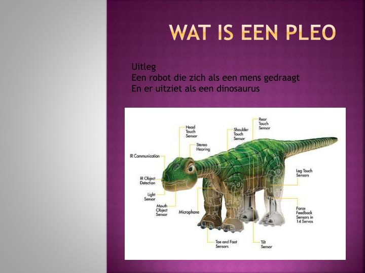 Wat is een pleo