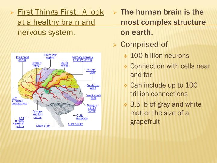 First Things First:  A look at a healthy brain and nervous system.