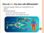 how do all the stem cells differentiate