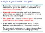 changes in spatial pattern hox genes