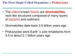the first single celled organisms prokaryotes