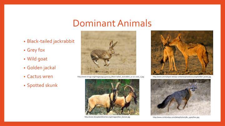 Dominant Animals