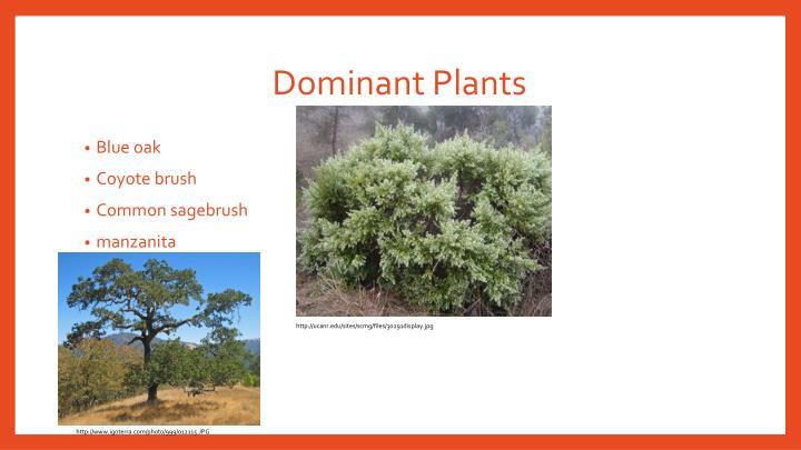 Dominant Plants