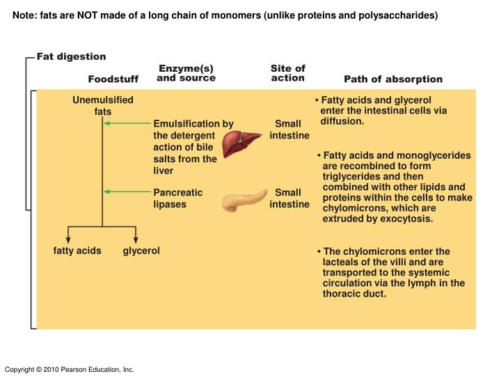 Note: fats are NOT made of a long chain of monomers (unlike proteins and polysaccharides)