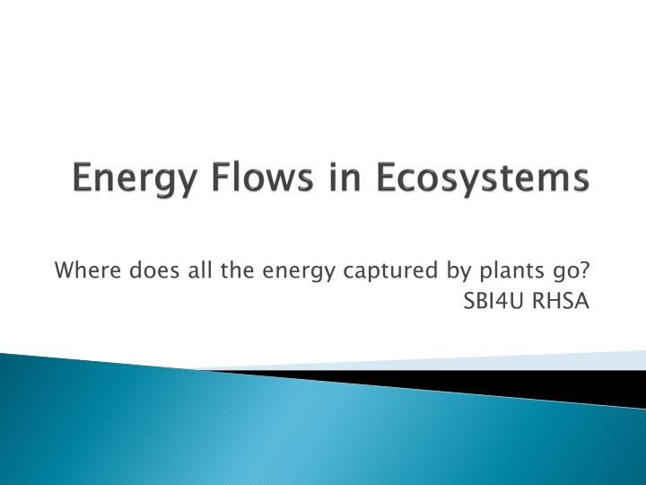 energy flows in ecosystems n.