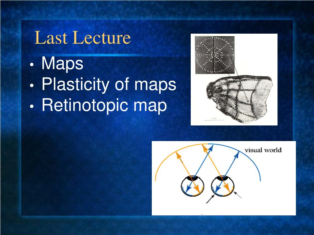 Ppt Maps Plasticity Of Maps Retinotopic Map Powerpoint