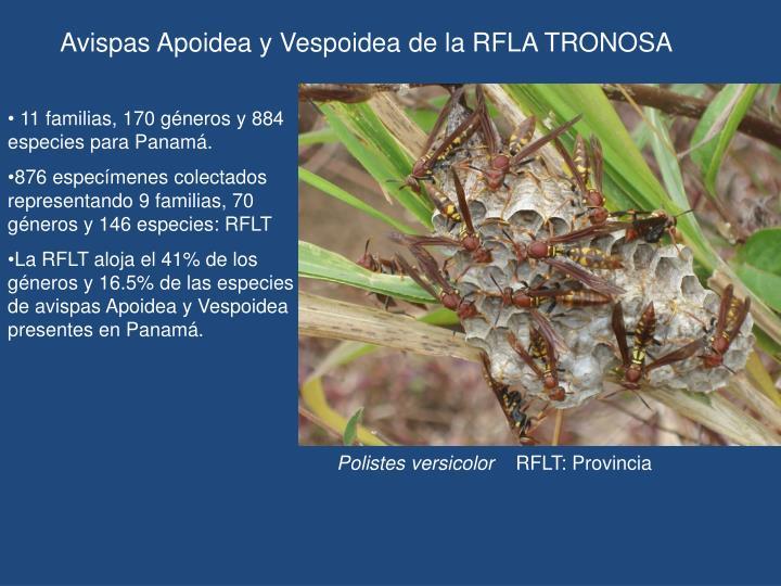 Avispas Apoidea y Vespoidea de la RFLA TRONOSA