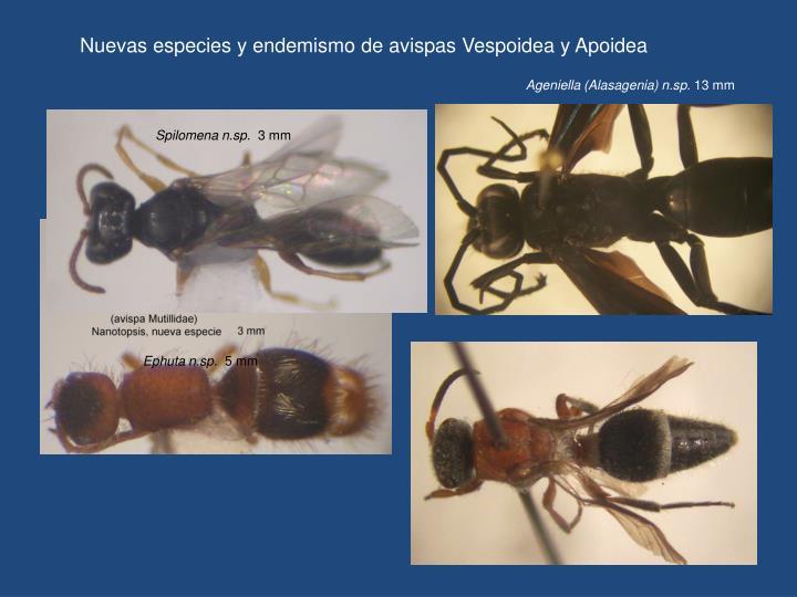 Nuevas especies y endemismo de avispas Vespoidea y Apoidea