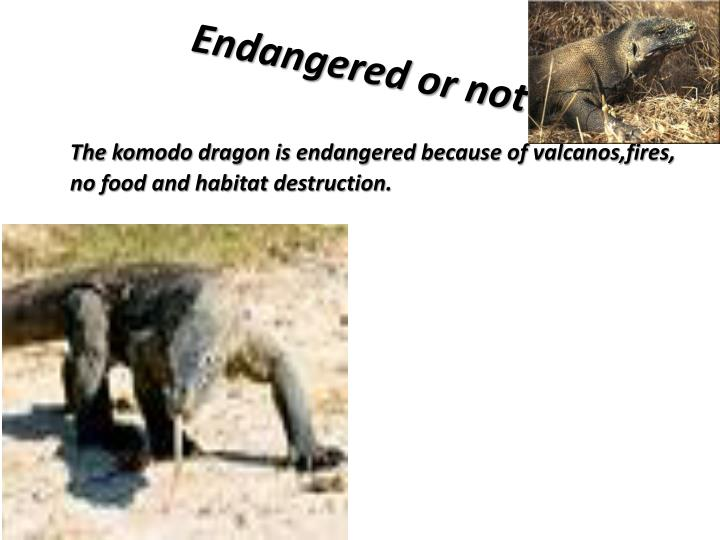 Endangered or not