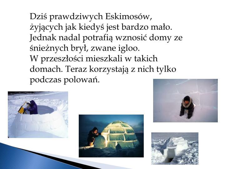 Dziś prawdziwych Eskimosów, żyjących jak kiedyś jest bardzo mało. Jednak nadal potrafią wznosić domy ze śnieżnych brył, zwane igloo.