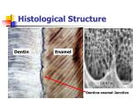 histological structure16