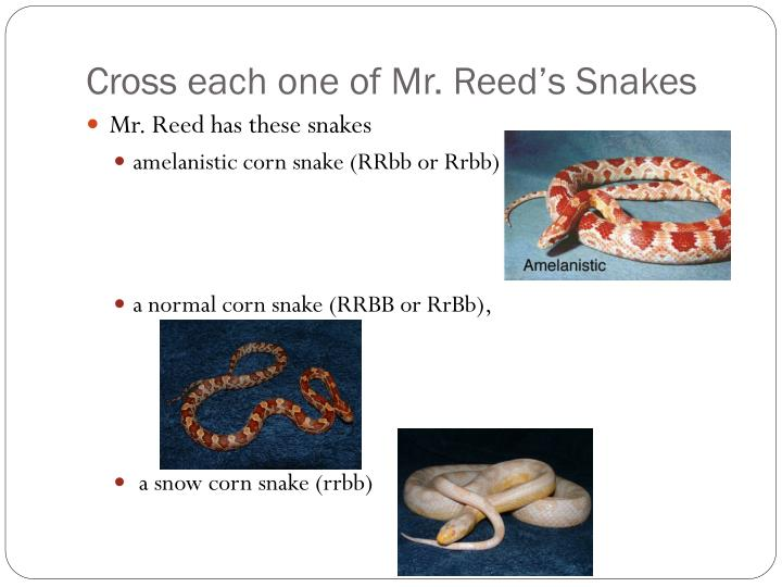 Cross each one of Mr. Reed's Snakes