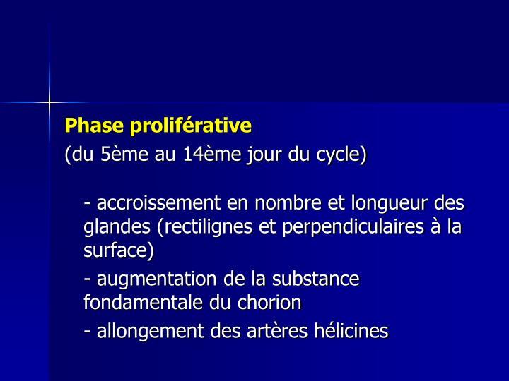 Phase proliférative