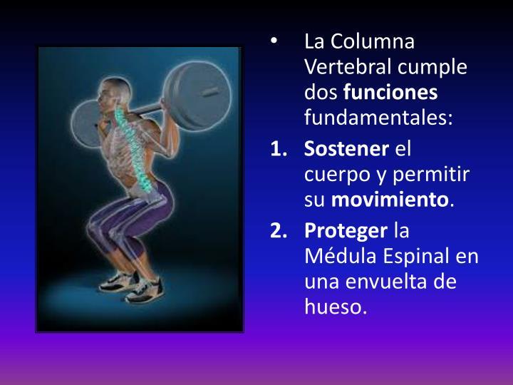 Único Anatomía Cervical De La Médula Espinal Imágenes - Anatomía de ...