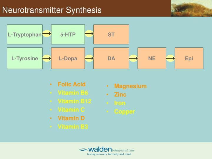 Neurotransmitter Synthesis