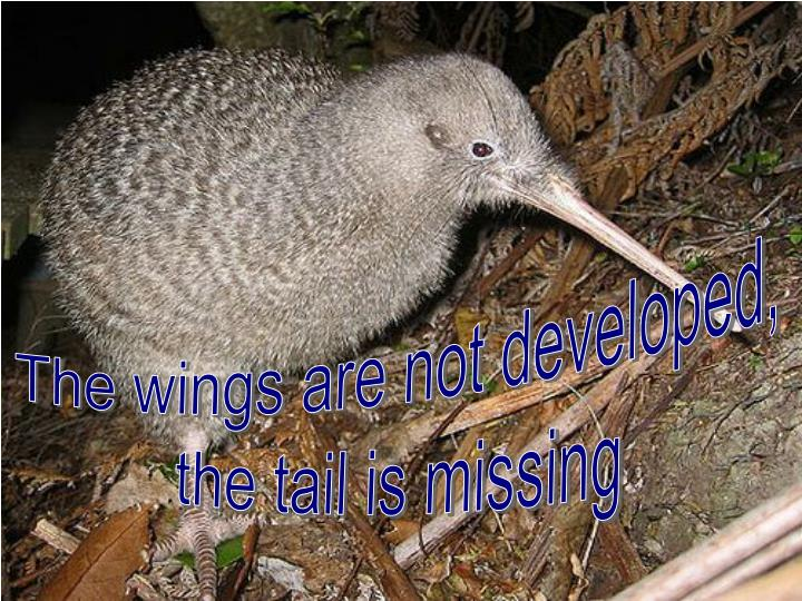 The wings are not developed,