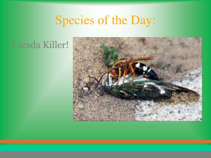 Species of the Day: