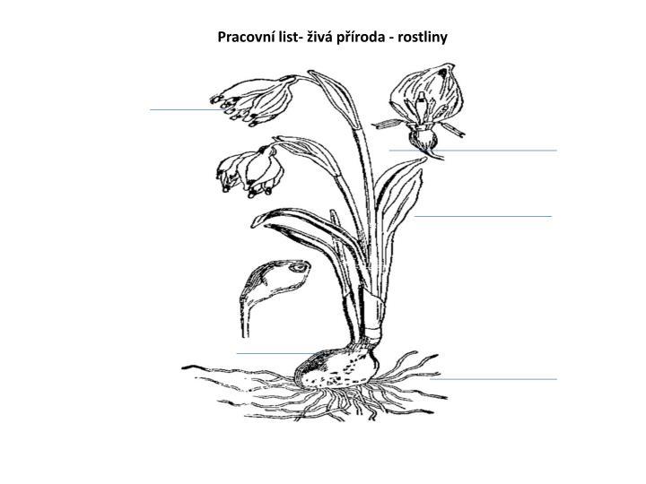 Ppt Pracovni List Ziva Priroda Rostliny Powerpoint Presentation