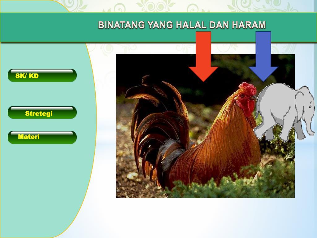 Ppt Binatang Yang Halal Dan Haram Powerpoint Presentation Free