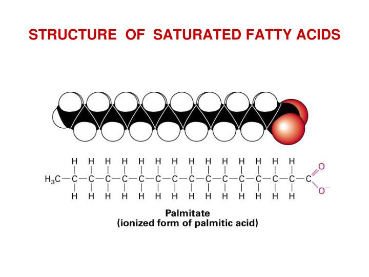 STRUCTURE  OF  SATURATED FATTY ACIDS