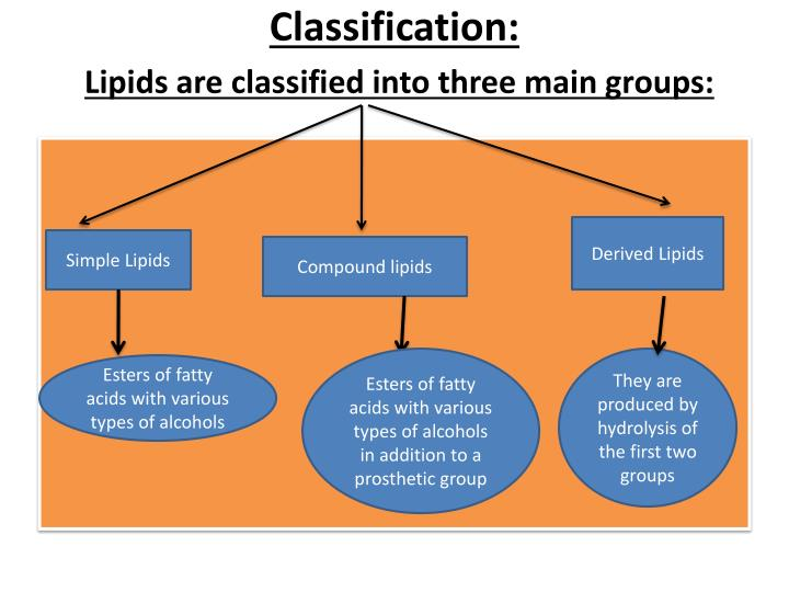 Classification lipids are classified into three main groups