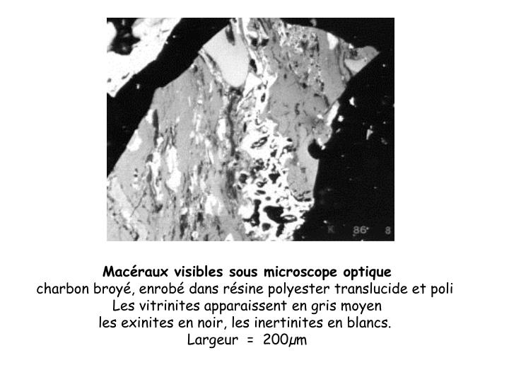 Macéraux visibles sous microscope optique