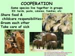 cooperation same species live together in groups ex herds packs colonies families etc