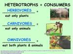 heterotrophs consumers