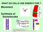 what do cells use energy for