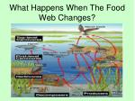 what happens when the food web changes