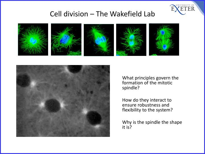 cell division the wakefield lab n.