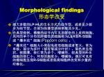 morphological findings