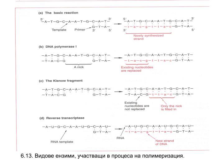 6.13. Видове ензими, участващи в процеса на полимеризация.