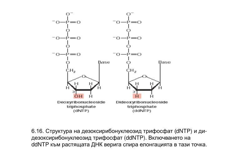 6.16. Структура на дезоксирибонуклеозид трифосфат (