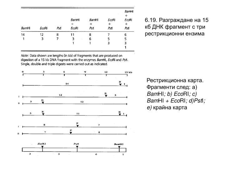 6.19. Разграждане на 15 кб ДНК фрагмент с три рестрикционни ензима