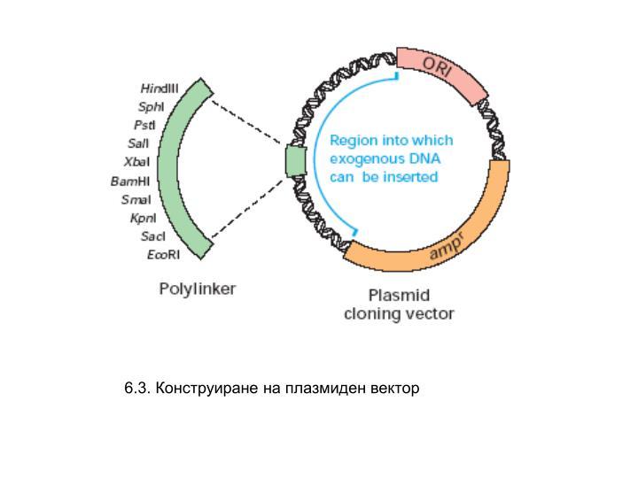 6.3. Конструиране на плазмиден вектор