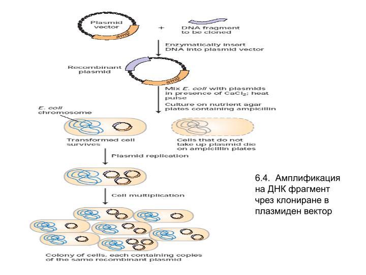 6.4.  Амплификация на ДНК фрагмент чрез клониране в плазмиден вектор
