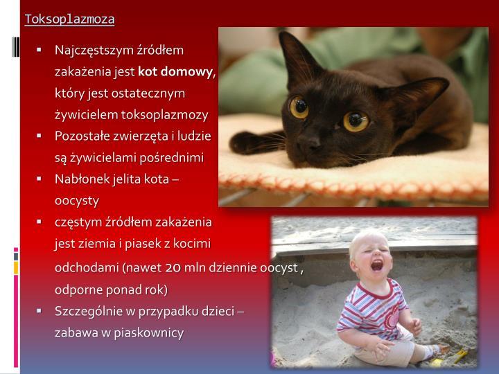 Toksoplazmoza1