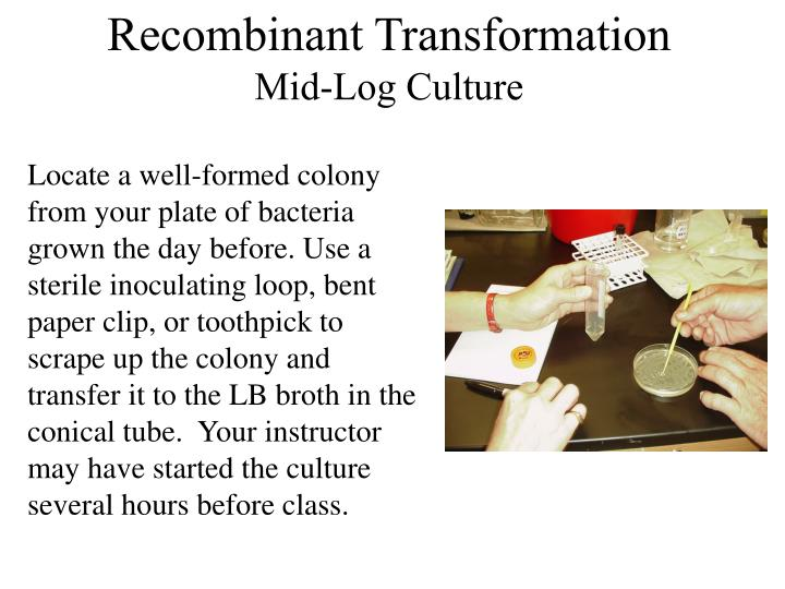 Recombinant Transformation