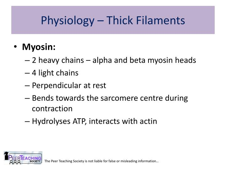Physiology – Thick Filaments