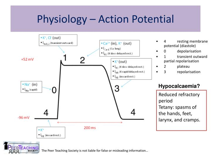 Physiology – Action Potential