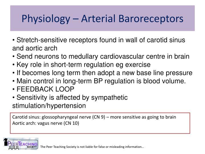 Physiology – Arterial Baroreceptors