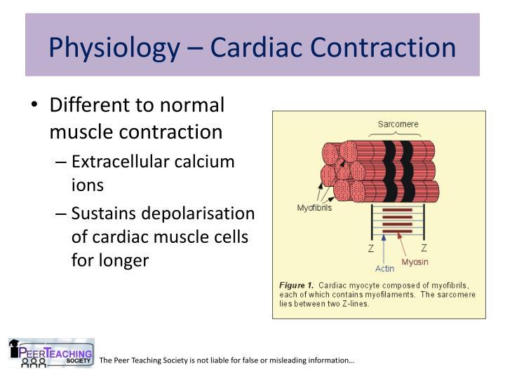 Physiology – Cardiac Contraction