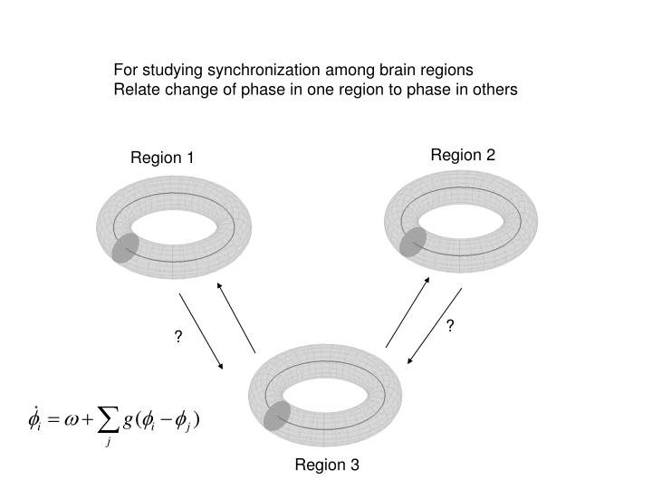 For studying synchronization among brain regions
