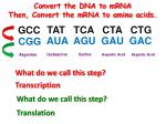 convert the dna to mrna then convert the mrna to amino acids
