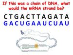 if this was a chain of dna what would the mrna strand be